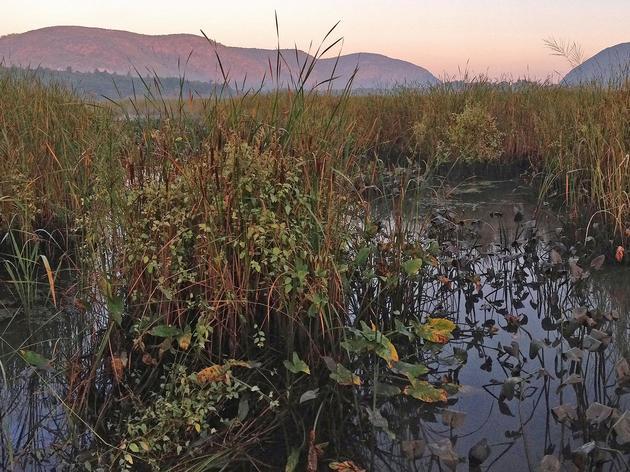 Paddling the Marsh